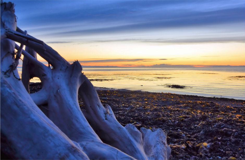 bois flotté sur une plage au couché de soleil